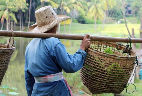 thailand-farmers